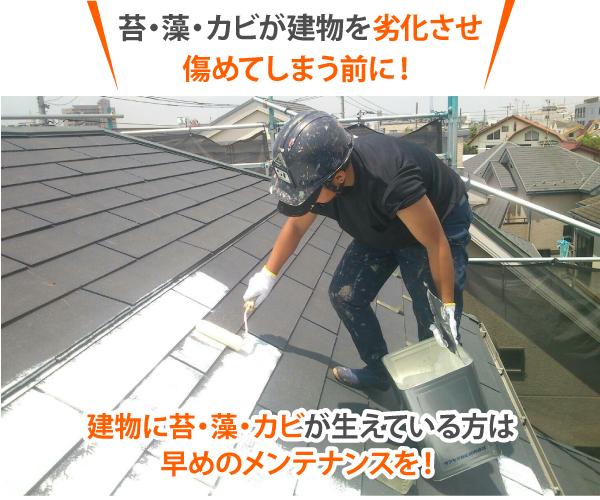 苔・藻・カビが建物を劣化させ傷めてしまう前に早めのメンテナンスを
